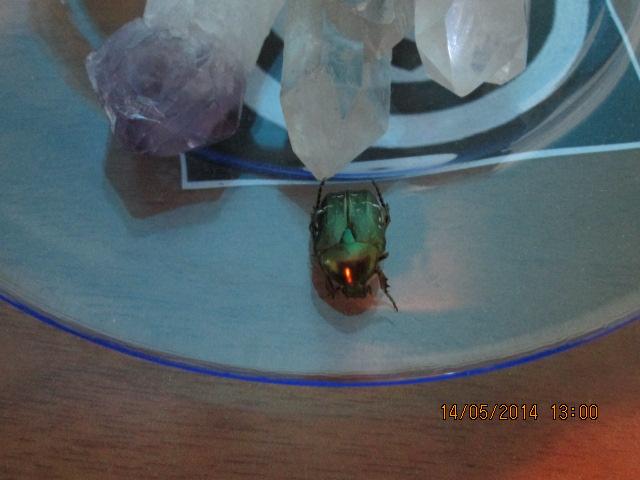 Lo scarabeo verde smeraldo 195