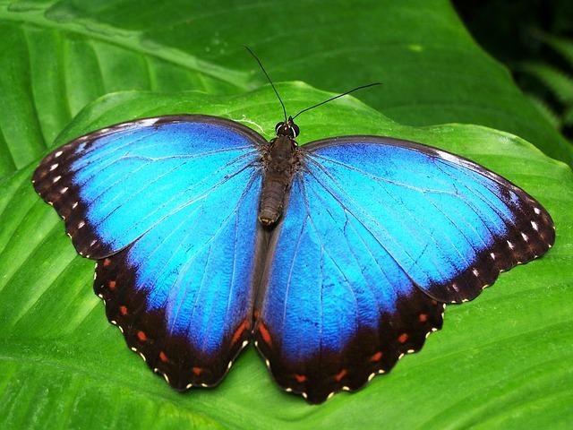 Simbolo e significato della farfalla