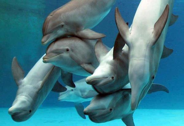 cute-dolphins