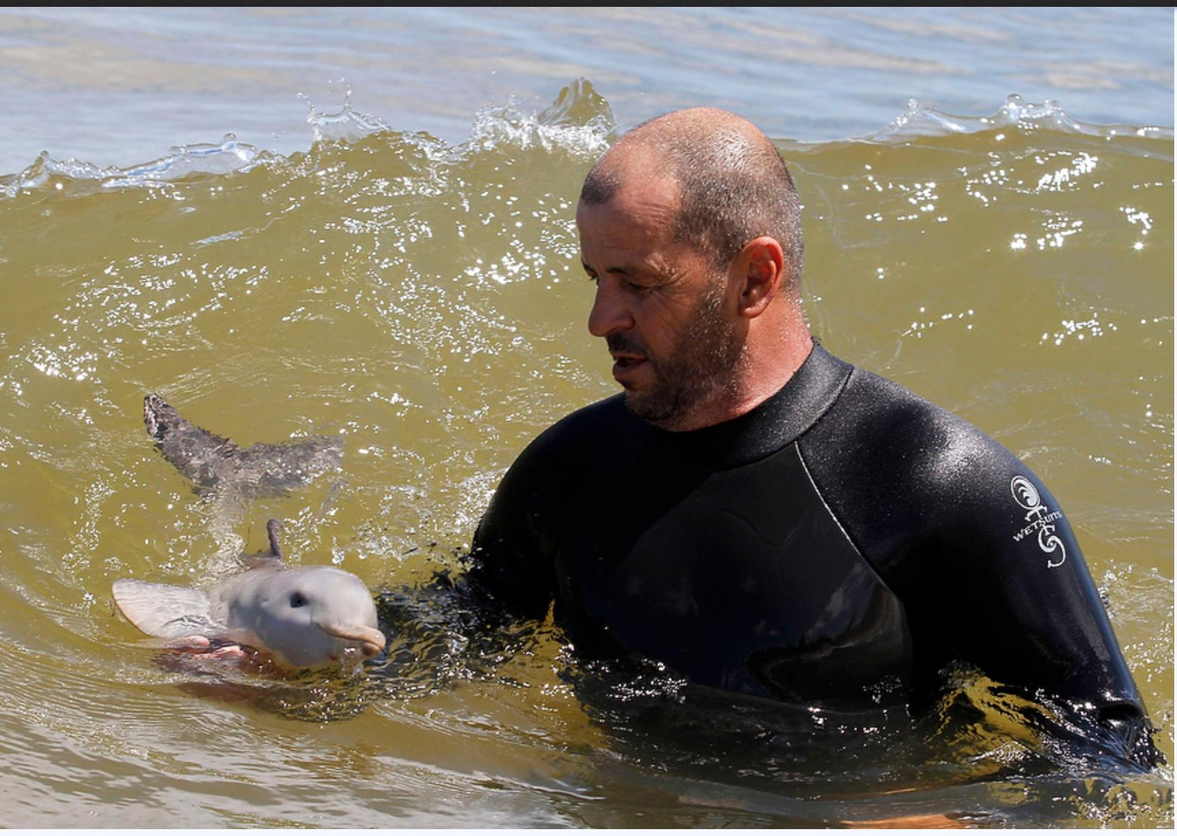Neonato di delfino adottato da un uomo