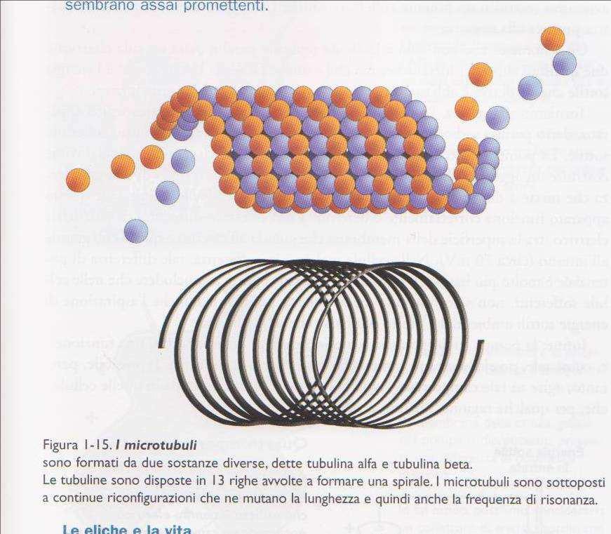 la spirale microtubuli
