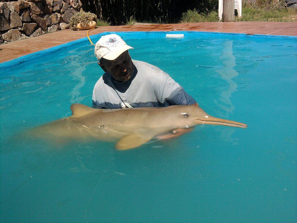 neonato di delfino400_n