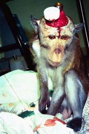 Sperimentazione sugli Animali 02