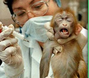 Sperimentazione sugli Animali scimmia