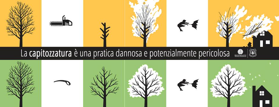 CAPITOZZARE alberi