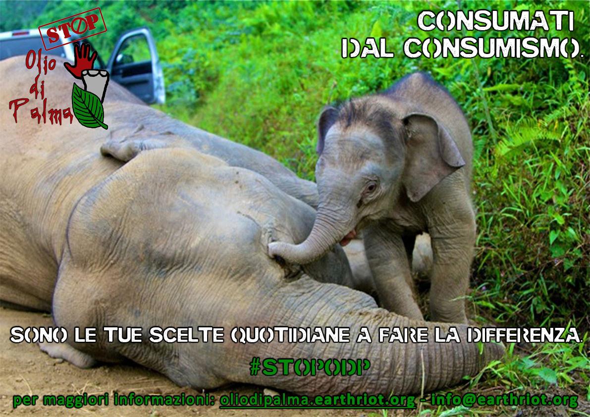 Gli Orfani dell'olio di Palma Elefanti-malesi-avvelenati