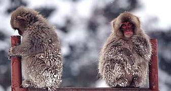 L'effetto centesima scimmia sta cambiando il pianeta 2