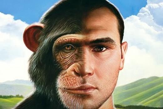 L'effetto centesima scimmia sta cambiando il pianeta 3