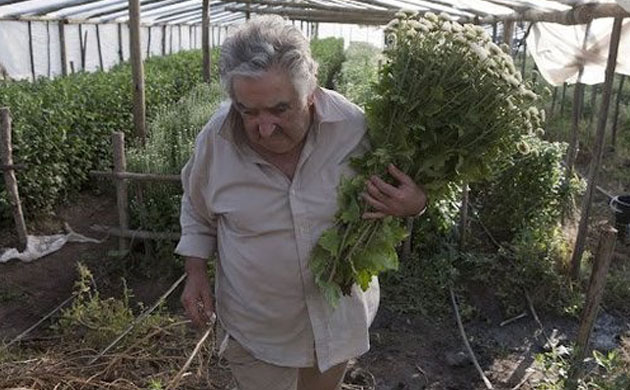 Mujica il presidente povero 2