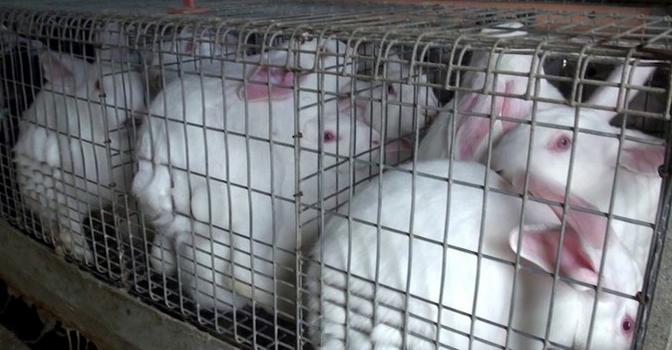 Carne di Coniglio 002
