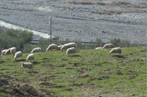 La Radionica In Agricoltura 001
