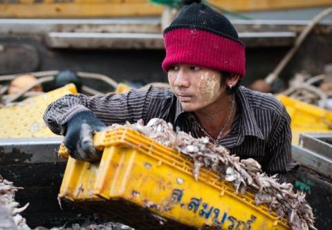 Schiavi Della Pesca In Thailandia 0m2