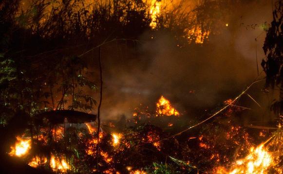 Olio di palma: Indonesia brucia 002