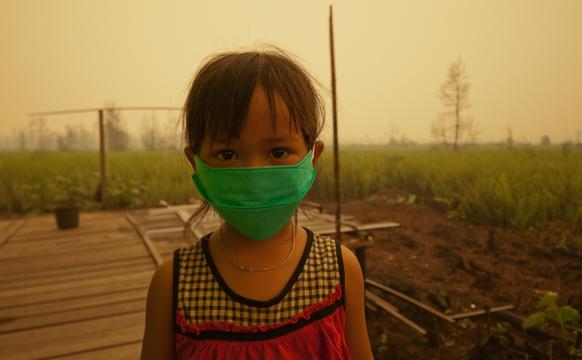 Olio di palma: Indonesia brucia 003