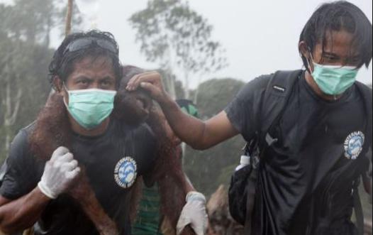 Olio di palma: Indonesia brucia 004