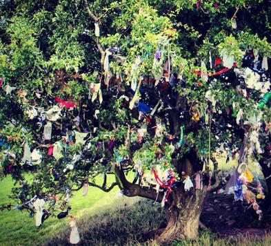 Beltane e Beleno fiori su alcuni alberi considerati
