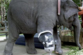 Elefanti Torturati