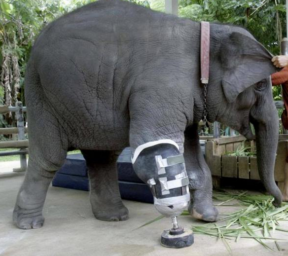 Elefanti Torturati 6