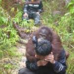 Borneo Orangutan Survival Foundation 007