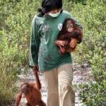 Borneo Orangutan Survival Foundation 009