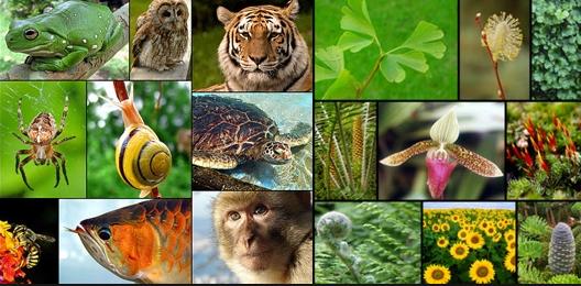 dimensioni animali piante