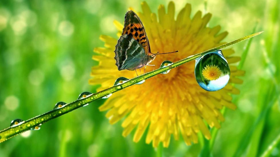 polarità e magnetismo foto-farfalla