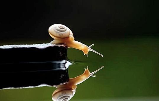 Legge dello specchio scarabeokheper - La legge dello specchio ...